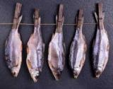 Ботулізм в рибі: як відрізнити і уникнути отруєння? Ботулізм: симптоми хвороби